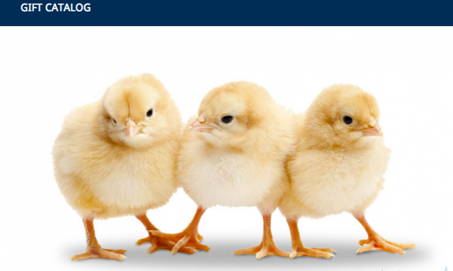 Samaritan's Purse Gift Catalog Baby Chicks